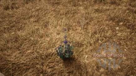 Sabio del desierto en RDR 2
