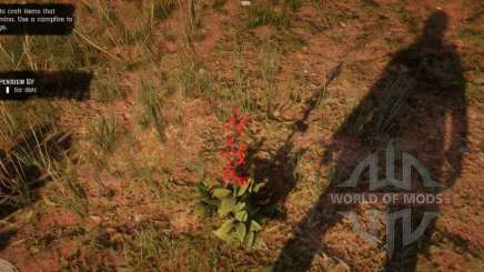 Salvia roja en RDR 2