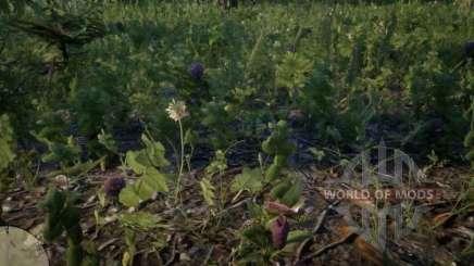 Zapatilla de dama Orquídea en RDR 2