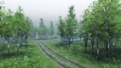 Bosque de abedul