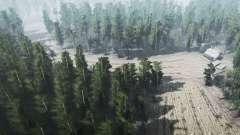 El Bosque de Setas