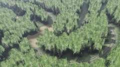 Bosque de siberia